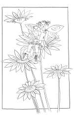 Daisy Boots - colouring-in drawing by Nancy Farmer