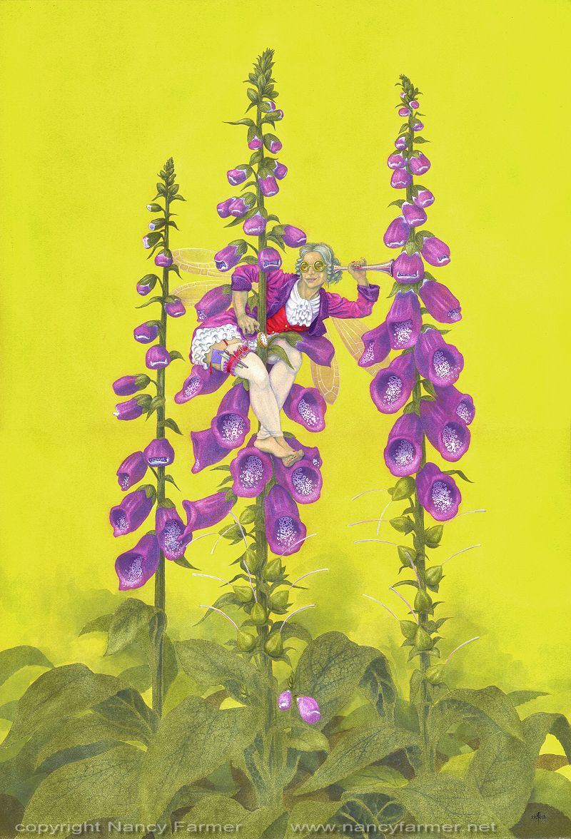 'Digitalis purpurea, the Foxglove Fairy' - painting in gouache by Nancy Farmer