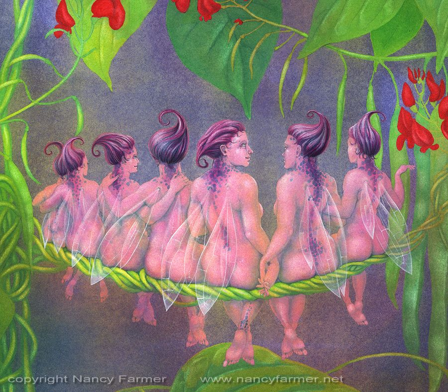 Close-up of 'The Flower Fairies go to Seed: Runner Beans'