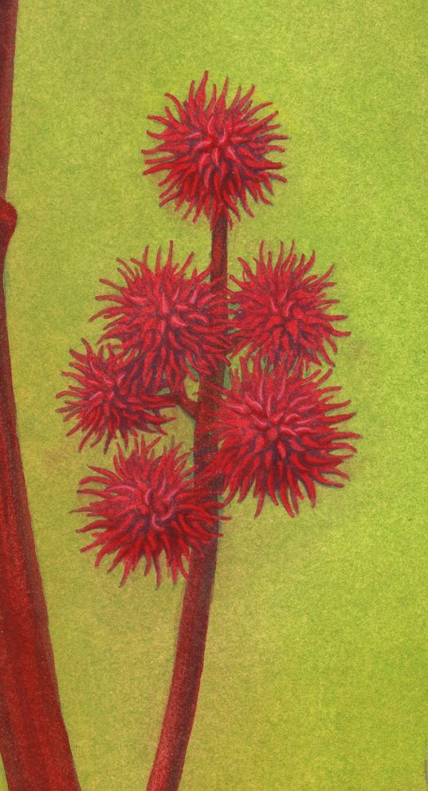 The Poison Flower Fairies: Ricinus Communis - close-up image 5
