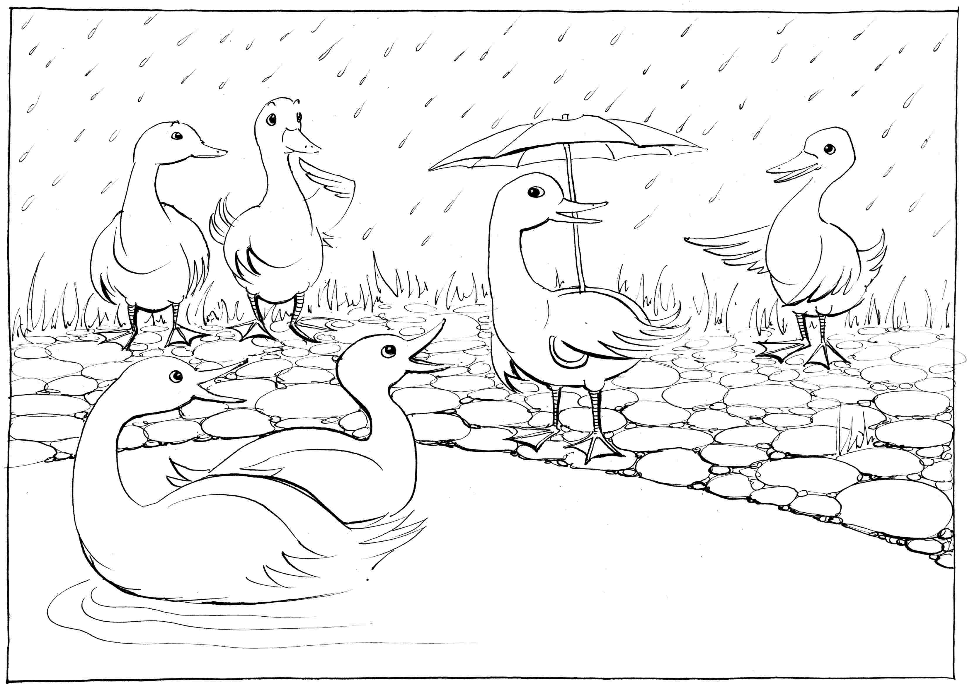 Water-Shy - colouring-in drawing - to download, right click and save, print out and colour in!